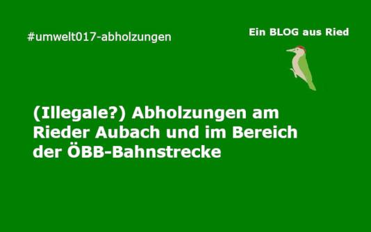 Abholzungen Aubach